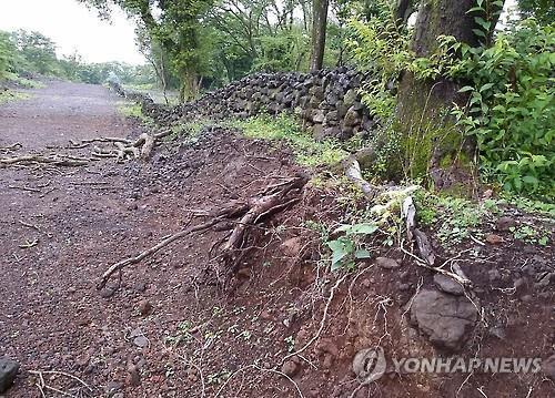 기획부동산 투기에 무참히 훼손된 제주 산림 [연합뉴스 자료사진]