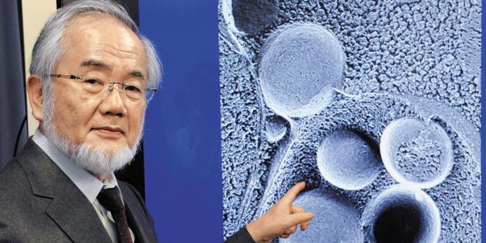 癌·난치병 치료할 '세포 청소'만 50년 매달렸다 | 다음뉴스