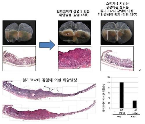 """""""오메가-3, 크론병·위암·대장암 등 억제 효과""""<동물실험>"""