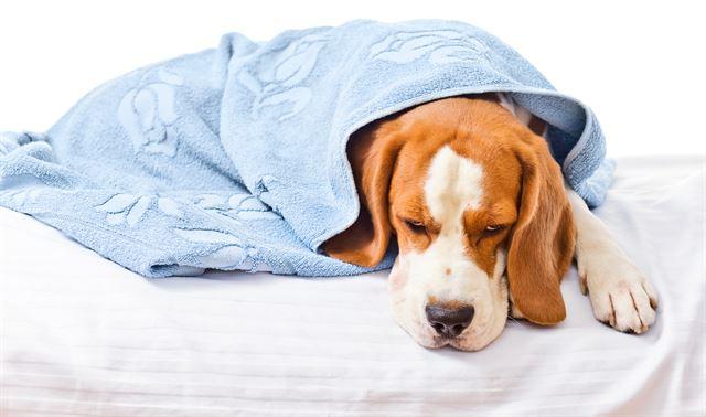 반려동물은 자신의 질병이나 고통을 감추려는 습성이 있다. 게티이미지뱅크