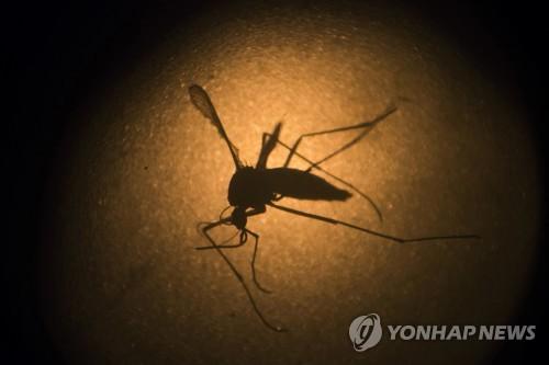 구글, 모기 잡는 모기 2천만 마리 푼다..지카 막을 묘수? #연합뉴스
