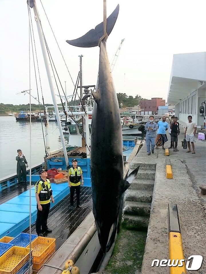 '그물에 걸린 밍크고래, '바다의 로또'라 부르지 마라' #뉴스1