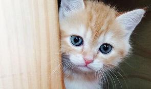 조금씩 가까워진 사랑스러운 고양이와 나