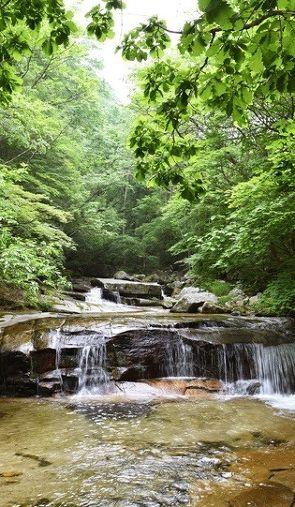 마음이 편안해지는 숲 속 계곡 셋
