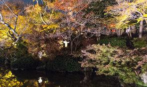 붉게 물들어 가는 가을의 교토