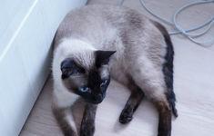 이사 후 새집에 적응 중인 고양이