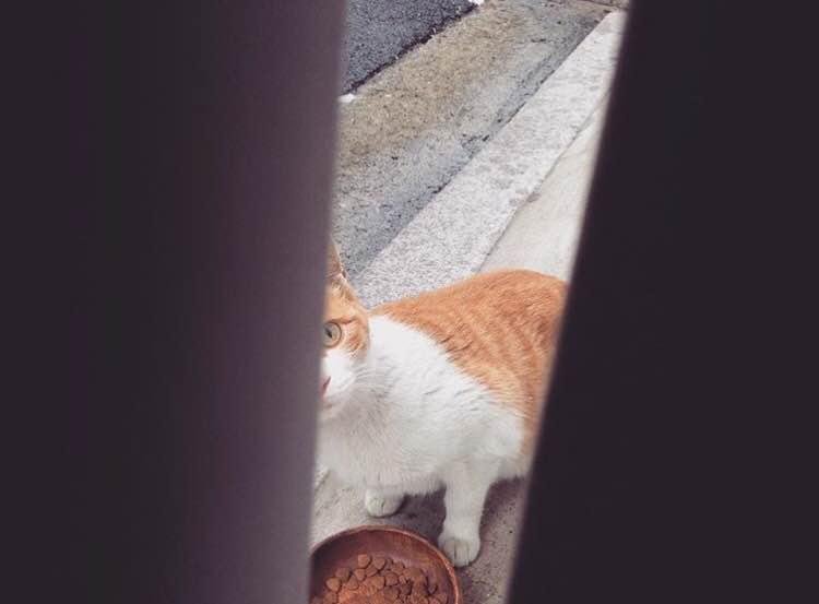 입춘기념으로 '길고양이 식당' 열다