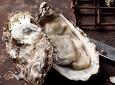 입 안에 가득 퍼지는 향긋한 바다내음 Enjoy the Oyster