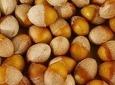 도토리가루에서 쇳가루 나와, 중금속 섭취 위험