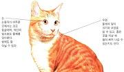고양이의 생김새
