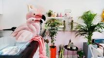 여심저격 분홍분홍 디저트카페 인테리어 이미지