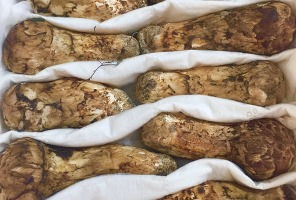 장백산 송이버섯