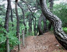 서울 도심 숲에서 캠핑하며 힐링!