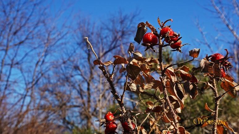 청도 한옥카페 꽃자리 식물원의 겨울