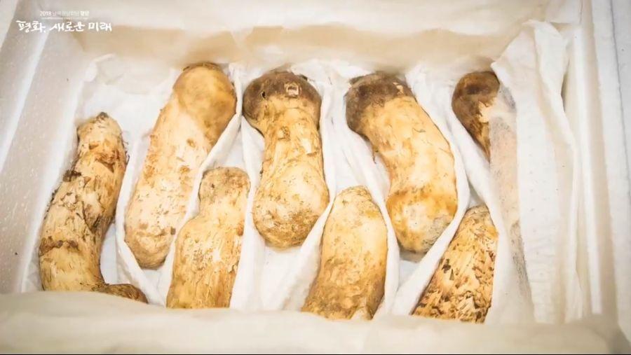 북한산 송이버섯