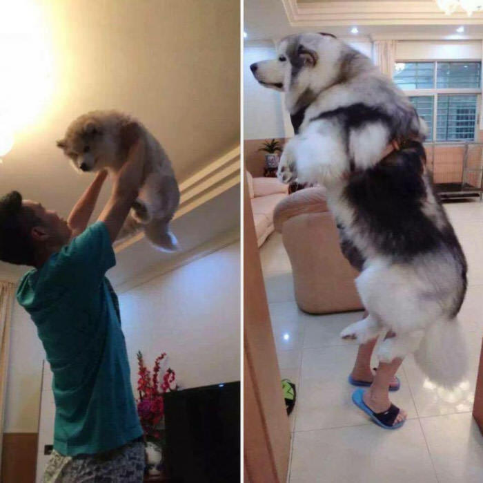 Pupper-then-doggo-now.jpg