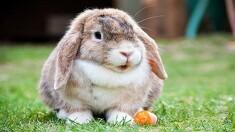 토끼는 목욕 시키면 위험합니까?