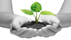 식물에게 좋은 말을 해주면 정말 잘 자라나요?