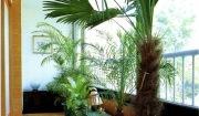 여러 가지 관상 식물로 꾸민 아파트의 베란다
