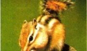 도토리를 즐겨 먹는 다람쥐