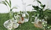 주전자와 유리잔을 이용한 수경 재배