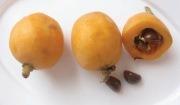 비파 열매와 씨(일본)