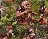 """'정글' 병만족, '식인전사의 후예' 멘타와이족에 위협 받아 """"항복!"""""""