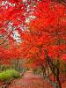 가을여행 ^..