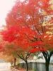 가을구경 하세용