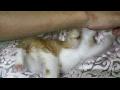 [영상][호냥이]호냥호냥한 일상- 현황 호냥이는 잘있어요! 호냥이 아빠입니다.