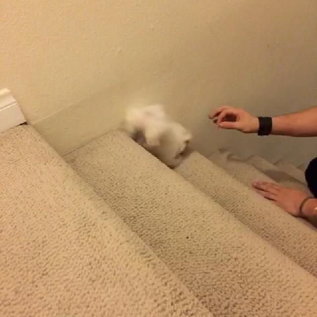 계단 오르는 강아지