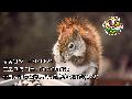 [일본라디오 사연코너] 20140821 ちょっと悲しくなった食事の記憶 (2/2)