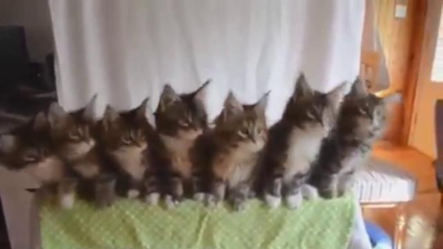 고양이 7마리 컨트롤하는 법