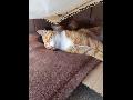 낮잠 자고 있는 고양이