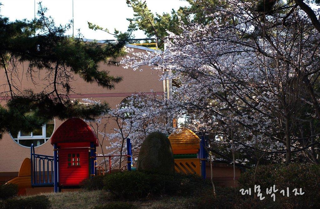 진해_군항제_벚꽃축제_해군사관학교