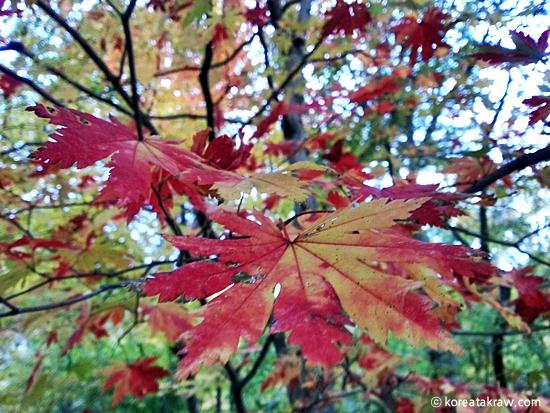 가을단풍사진