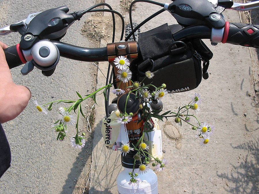 자전거로 달리자 - 3일차 ① ▷ 충청도 : 1113884B513BA4DB349F18