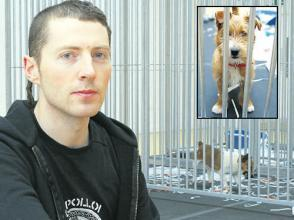 Controversial stray dog exhibition opens