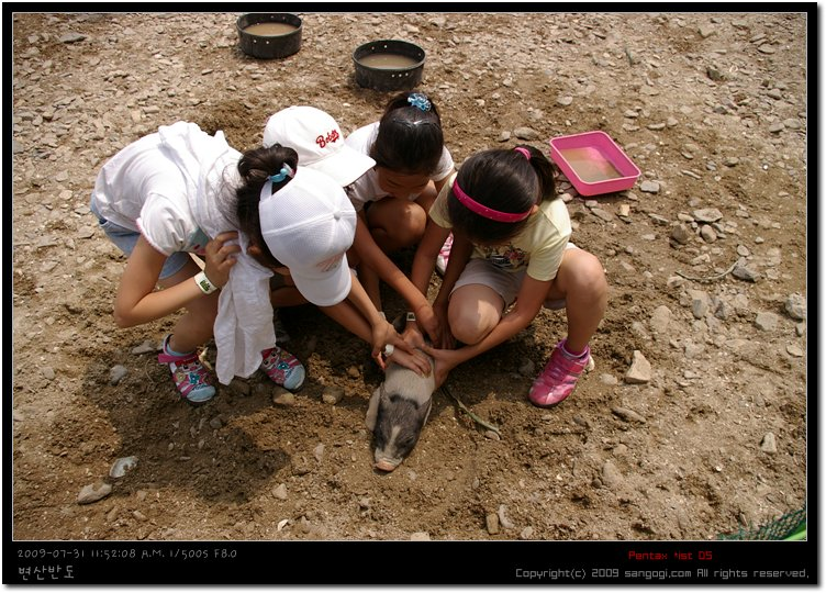 하루종일 애들 피하느라 돼지의 하루가 고달프다.