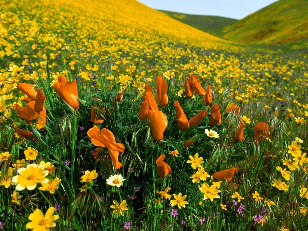 예쁜 꽃 바탕화면