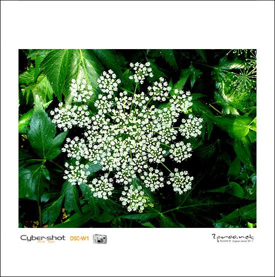 초여름 꽃과 식물 사진