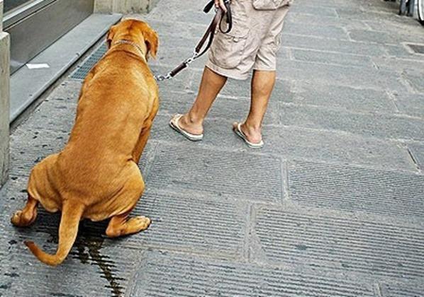 강아지 배변 훈련