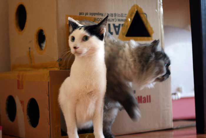 고양이 집 만들기, 고양이 집, 땅콩집, 고양이, 고양이 통로, 고양이 숨을 장소, 고양이 DIY, 고양이 용품, 리뷰, 사진, 동물, 고양이 사진