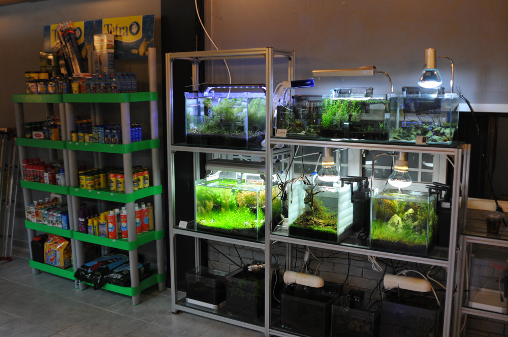 Blue Top Aquarium