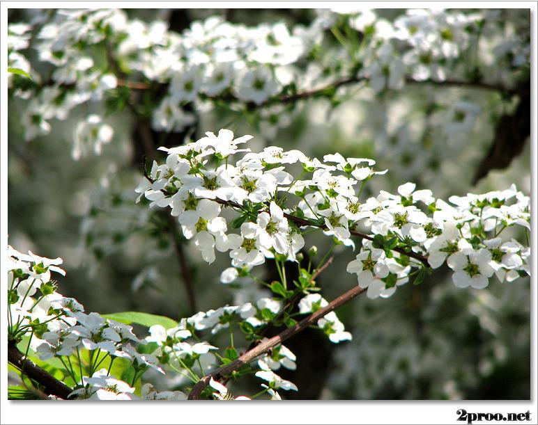 예쁜 봄 꽃 사진