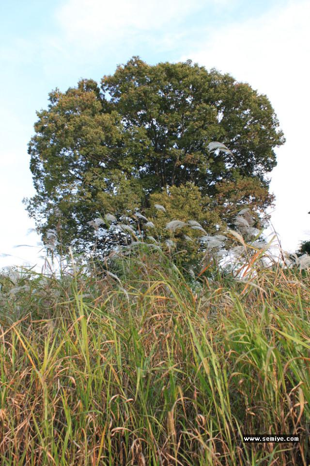 가을-추일서정-낙엽-겨울-가을우울증-추수-수확-벼-곡식-농부-농촌-낭만-추석