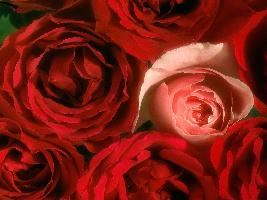 꽃 바탕화면 1600 *1200