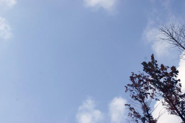 사계절 행복한 '이안숲속' 오토캠핑장에서 함께한 '지엠대우 오토캠핑 2009'에 다녀왔습니다.
