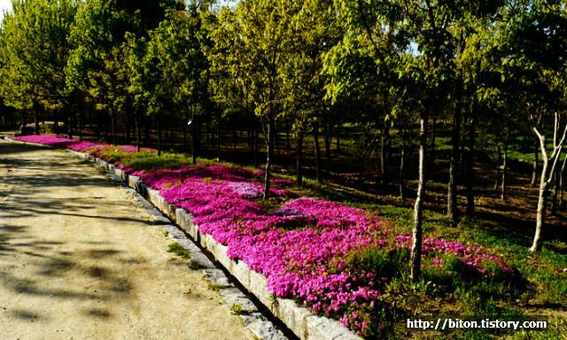 한밭수목원 봄