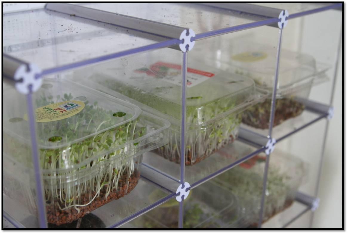 새싹채소 재배로 인테리어 효과내기